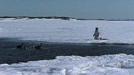 An Innu hunter sets up his bait for the Goose Hunt