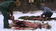 Two Innus cutting caribou meat into pieces