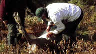 An Innu cuts open a caribou to empty it