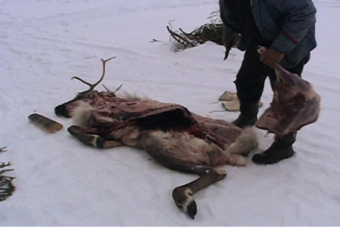 caribou haunch