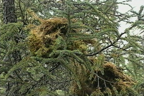 they dry sphagnum moss