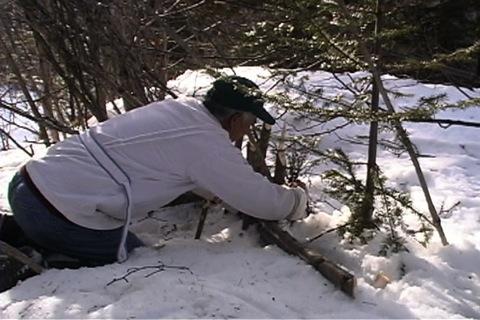 birch branches as bait