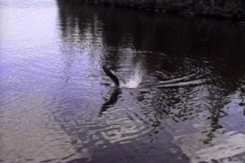 il sort de l'eau