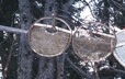 Temporary snow shoes hanging from a tree branch