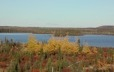 Fall landscape in the boreal forest