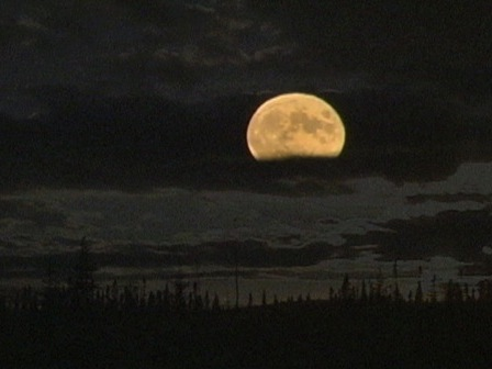 Full moon in a forest landscape